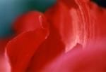 Punainen aalto
